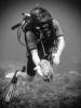 neuseeland-diving