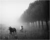 wild-horses-a29297297