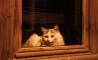 le-chat-noir-lagrasse