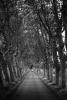 x-canal-midi-car-trees