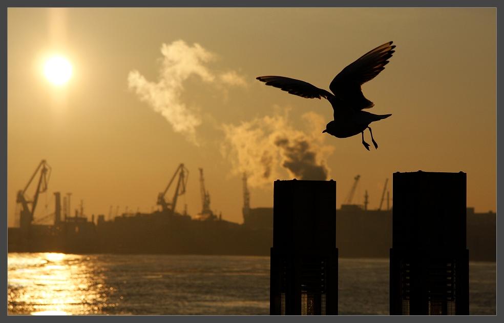 Hamburger Hafen Foto 2