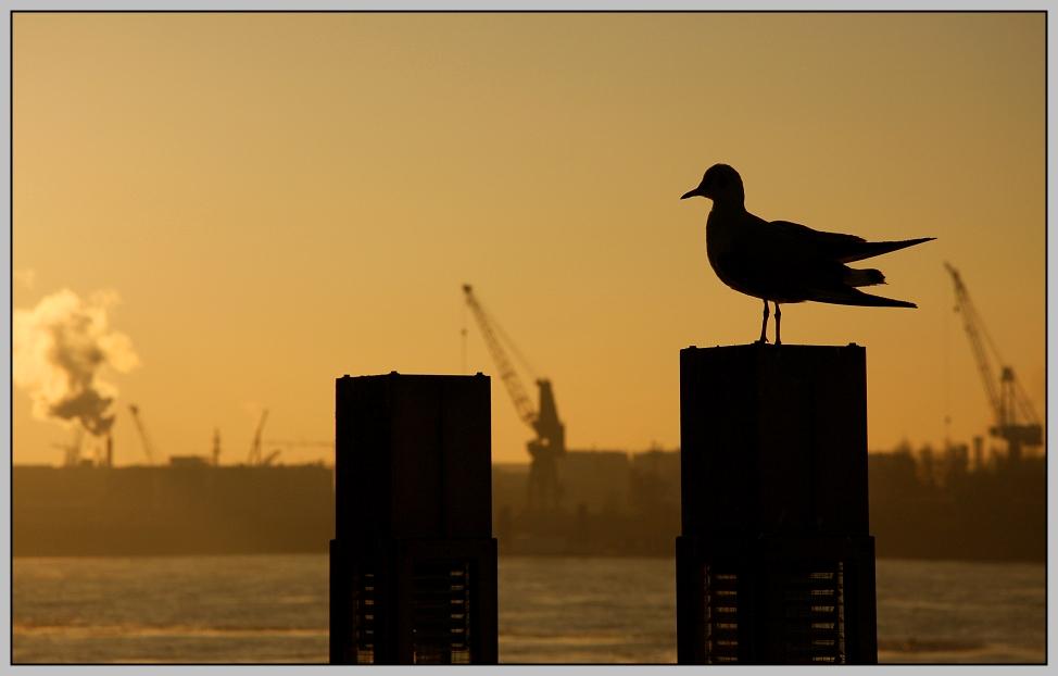 Hamburger Hafen Foto 1