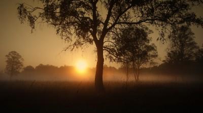 Sonnenaufgang Nebel Baum Foto