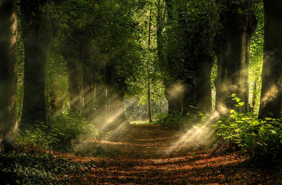 Sonnenstrahlen - Nebel Foto